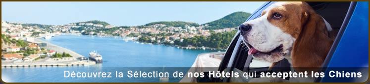 Hôtels – Chiens Acceptés
