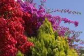 Hôtel Valescure Golf & Spa - Fleurs Végétation
