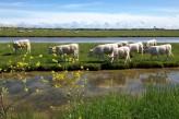 Grand hôtel des bains à Fouras – Marais et troupeau à Fouras