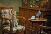 Hôtel l'Yeuse & Spa - Cognac contemplé par un chat