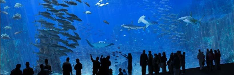 Nausicaa spectacle ocean