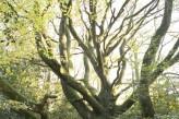 Hôtel le Roi Arthur - la nature