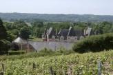 Domaine de la Courbe - Vignes @Ot vallée du loir Lhomme