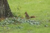 Hôtel l'Aubinière & Spa – 1 écureuil dans le parc de l'hôtel
