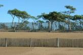 Hôtel Spa du Béryl - Dune et pins