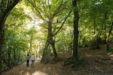 Forêt de Brocéliande : le Val sans retour balade à 15km de l'hôtel le Roi Arthur @BERTHIER-Emmanuel