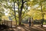 Forêt de Brocéliande : le Val sans retour – Eau intérieure de l'Etang à 15km de l'hôtel le Roi Arthur @BERTHIER-Emmanuel